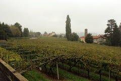 Wijngaarden van Ivrea royalty-vrije stock afbeelding