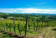 Wijngaarden van Langhe, Piemonte - Italië stock afbeelding