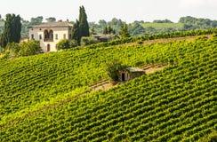 Wijngaarden van Montalcino (Toscanië) stock afbeelding
