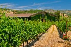 Wijngaarden van napavallei Stock Foto
