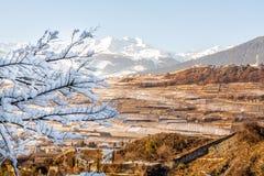 Wijngaarden van Sion in Zwitserland, panorama Stock Foto