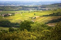 Wijngaarden van Solutré dorp, Bourgogne, Frankrijk Stock Foto