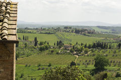 Wijngaarden van Toscanië Stock Afbeelding