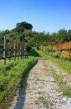 Wijngaarden in verticale daling, Royalty-vrije Stock Foto's