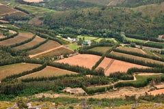 Wijngaarden in vruchtbare vallei stock afbeelding