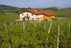 Wijngaarden, wijnproductie (txakoli) Getaria royalty-vrije stock foto's