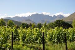 Wijngaarden winelands in Kaap Zuid-Afrika stock foto