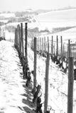 Wijngaardeninstallaties, de winter sneeuwmening De Zwart-witte foto van Peking, China Royalty-vrije Stock Fotografie