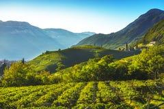 Wijngaardenmening in Santa Maddalena Bolzano Trentino Alto Adige S royalty-vrije stock afbeeldingen