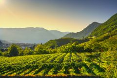 Wijngaardenmening in Santa Maddalena Bolzano Trentino Alto Adige Sud Tyrol, Italië stock fotografie