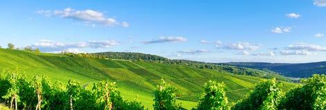 Wijngaardenpanorama weinstadt Royalty-vrije Stock Foto's