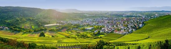 Wijngaardenpanorama weinstadt Stock Afbeeldingen