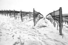 Wijngaardenperspectief, de winter sneeuwmening De Zwart-witte foto van Peking, China Royalty-vrije Stock Afbeeldingen