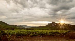Wijngaardgebied Royalty-vrije Stock Afbeeldingen