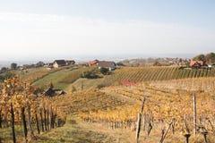 Wijngaardheuvels stock afbeeldingen