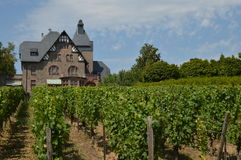 Wijngaardhuis Stock Foto's