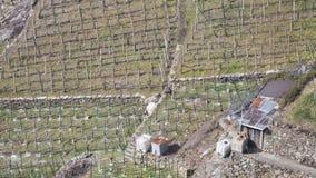 Wijngaardlandbouwbedrijf met een keet met het groene gras royalty-vrije stock foto