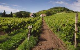 Wijngaardlandbouwbedrijf op een heuvel Stock Fotografie