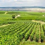 Wijngaardlandschap royalty-vrije stock foto's