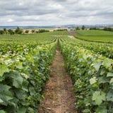 Wijngaardlandschap royalty-vrije stock foto