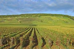Wijngaardlandschap, Chablis, Bourgondië, Frankrijk royalty-vrije stock afbeelding