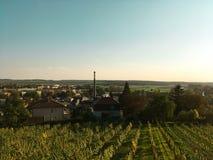 Wijngaardlandschap in de zomer Stock Afbeeldingen