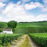 Wijngaardlandschap in Frankrijk stock foto's