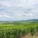 Wijngaardlandschap, Montagne de Reims Stock Foto's