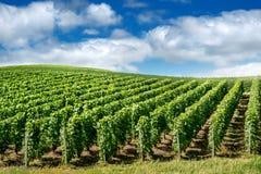Wijngaardlandschap, Montagne de Reims Stock Foto