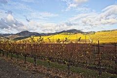 Wijngaardlandschap tijdens atumn stock afbeelding