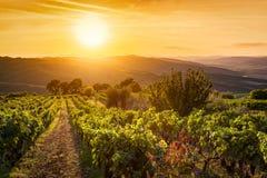 Wijngaardlandschap in Toscanië, Italië Wijnlandbouwbedrijf bij zonsondergang Stock Foto's