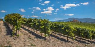 Wijngaardpanorama bij een de Wijnmakerijlandgoed van Toscanië Stock Afbeelding