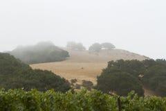 Wijngaardrijen Royalty-vrije Stock Fotografie