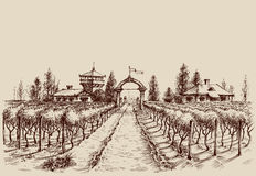 Wijngaardtekening vector illustratie