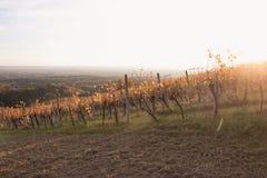 Wijngaardzonsondergang stock afbeelding