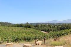Wijngebieden in Sonoma royalty-vrije stock foto