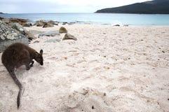 Wijnglasbaai - het Nationale Park van Freycinet - Tasmanige stock fotografie