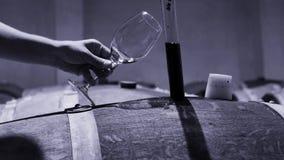 Wijnhandelaar die steekproef van rode wijn in kelder nemen stock video
