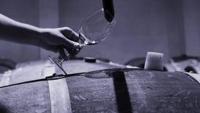 Wijnhandelaar die steekproef van rode wijn in kelder nemen Wijn het testen stock videobeelden