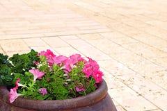 Wijnkom met bloemen op de yard van de Griekse Orthodoxe het Huwelijkskerk van Cana in Cana van Galilee, Kfar Kana royalty-vrije stock fotografie