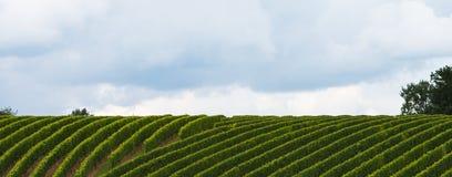 Wijnland wijngaard-Jurançon-Frankrijk Royalty-vrije Stock Foto's