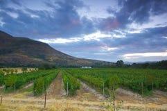 Wijnlandbouwbedrijf, Stellenbosch. Zuid-Afrika Royalty-vrije Stock Foto