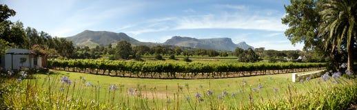 Wijnlandgoed in Cape Town stock afbeeldingen