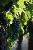 Wijnmakerij Royalty-vrije Stock Fotografie