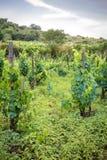 wijnmakerij Royalty-vrije Stock Foto's