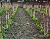 wijnmakerij royalty-vrije stock afbeeldingen