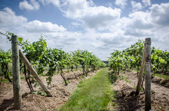 Wijnmakerij op een de zomerdag Stock Foto's