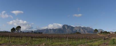 Wijnmakerij in Zuid-Afrika Stock Foto