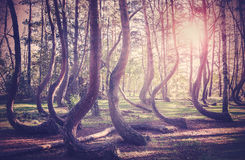 Wijnoogst gefiltreerd beeld van zonsondergang bij geheimzinnig bos royalty-vrije stock afbeeldingen