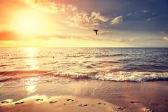 Wijnoogst gefiltreerd strand bij zonsondergang stock foto
